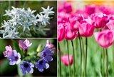 Tūkstančiai plūsta pamatyti šių gėlių: Lietuvoje žydi tik kartą per metus