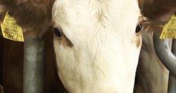 Gelbėjo 6 paras kalinčius gyvūnus – kai kurie neatlaikė