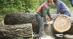 Siekiant lietuvos miškų nuosavybės ribojimų – prekyba tik suintensyvėjo