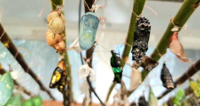 Vilniuje – drugelių paroda