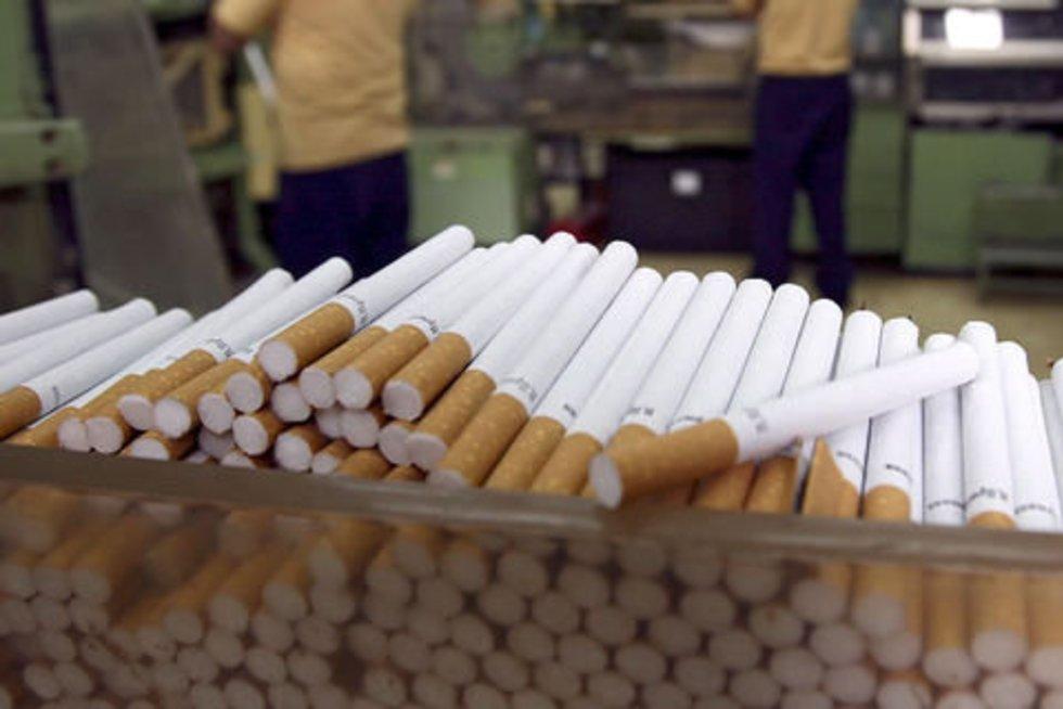 Sulaikytas tabakas buvo skirtas nelegaliam cigarečių fabrikui Lenkijoje (Scanpix nuotr.) (nuotr. Balsas.lt)