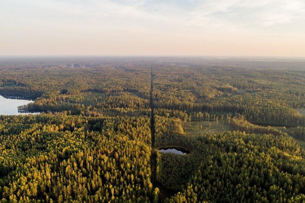 Miškas (Irmantas Gelūnas/Fotobankas)