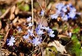 Sinoptikai: šiandien oras kvepia pavasariu