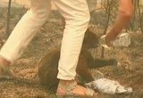 Drama Australijoje: moteris koalą išplėšė iš ugnies gniaužtų