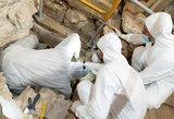 Graikijoje rastas 2000 metų senumo kapas: ką rado jame – pribloškia