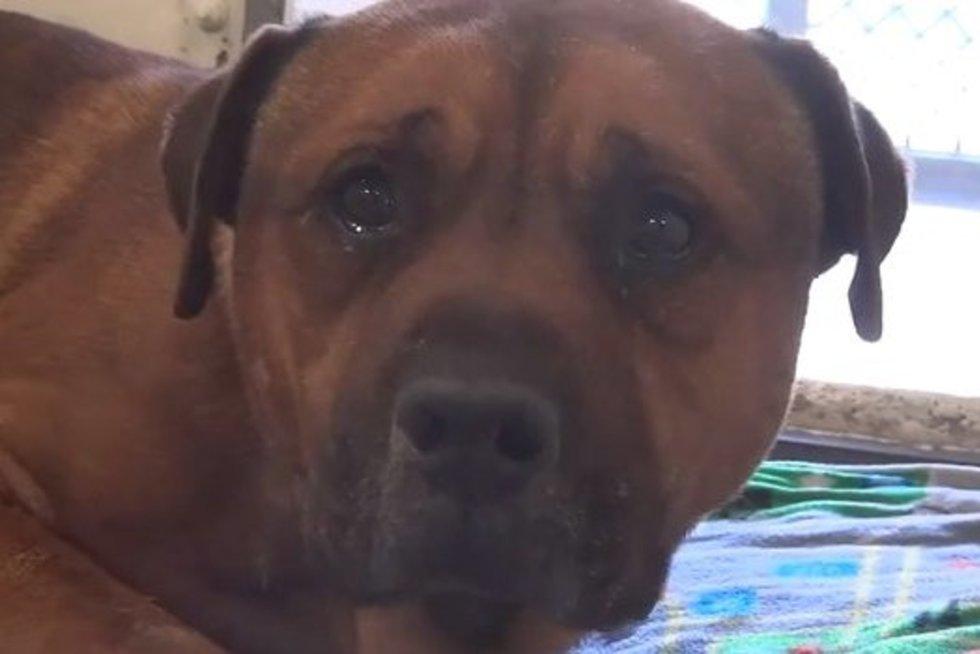 Širdį veriantis vaizdas: šeimininkų paliktas šuo negalėjo nustoti verkti ir drebėti (nuotr. facebook.com)