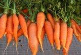 Tyrimas: senųjų rūšių daržovės mažina cukraus kiekį kraujyje