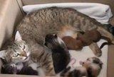 Motiniška meilė: katė priglaudė du voveriukus