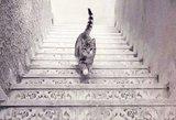 Greitas testas: kokia kryptimi katė eina laiptais?