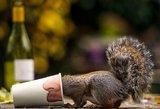 Smagios fotografijos: smalsuolės voverės