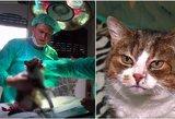 Gelbėjo myriop pasmerktą katę: ką rado, nustebino patyrusį veterinarą