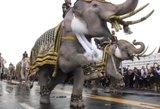 Karališkieji baltieji drambliai pasauliui pademonstravo neapsakomą pagarbą