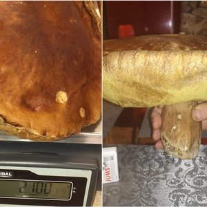 Baravykų kaime rado grybų karalių – gigantas svėrė virš 2 kilogramų