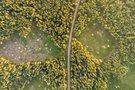 Labanoro giria (Irmantas Gelūnas/fotobankas.lt) (Irmantas Gelūnas/Fotobankas)