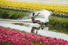 Olandija (nuotr. SCANPIX)