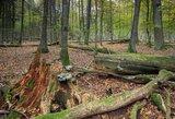 Neeilinė vagystė Kauno apskrityje: vyras pasigedo 23 medžių