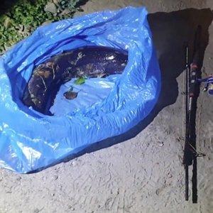 Brakonieriai siaučia kone Lietuvos prezidento kieme – žudo karališkas žuvis