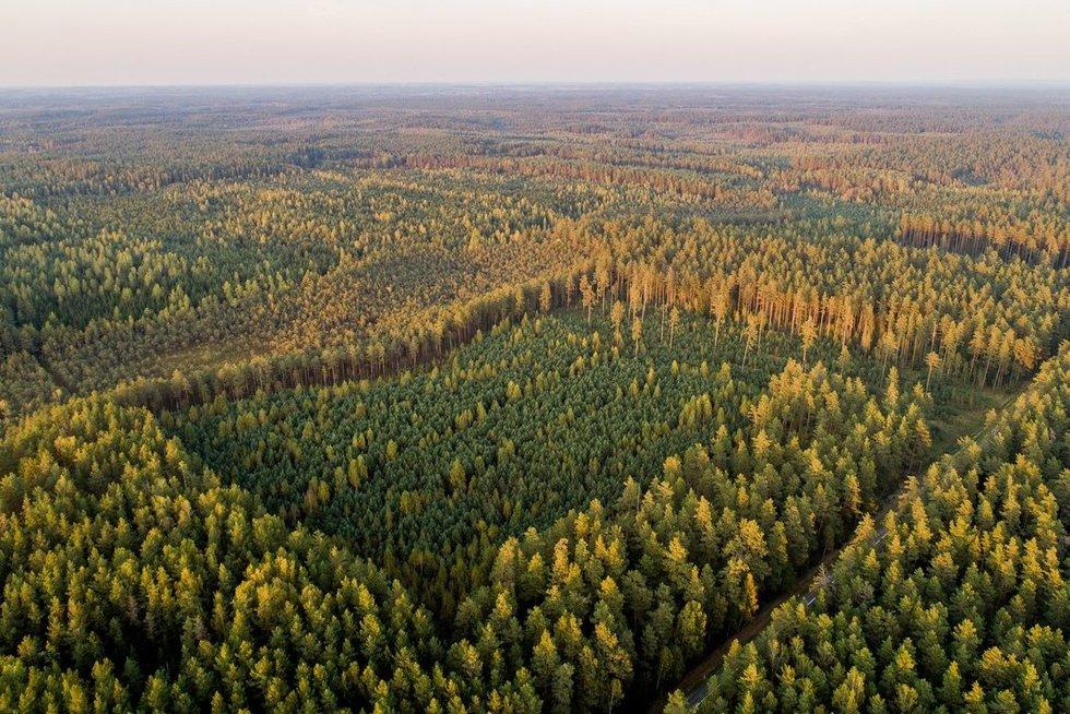Miškas (Irmantas Gelūnas/fotobankas.lt) (Irmantas Gelūnas/Fotobankas)