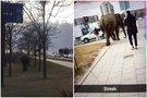 Dramblys Vilniuje (nuotr. facebook.com)