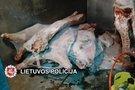 Lietuvis verslininkas prekiavo pašvinkusia mėsa: žmonės pirko tonomis (nuotr. Policijos)