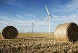 Vėjo jėgainės muša rekordus