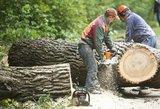 Seimas pakartotinai priėmė Miškų įstatymą