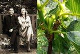 Jūratė egzotinių vaisių jau nebeperka: juos užsiaugina savo namuose pati