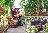Pareigūnės Ingridos šiltnamyje – pomidorų rojus: derlius raibsta akyse
