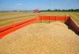 Prikultas rekordinis grūdų derlius