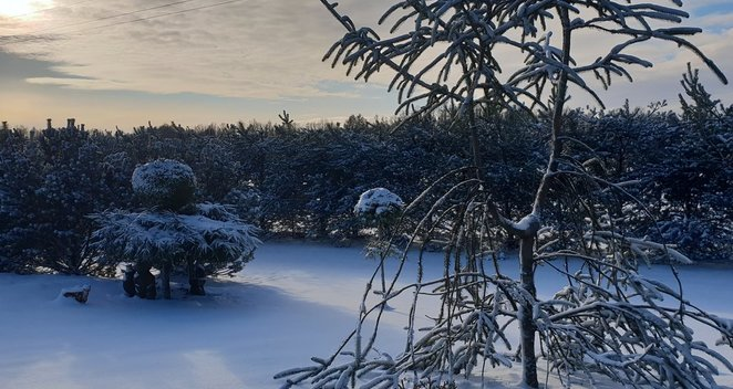 Gražiosios žiemos akimirkos