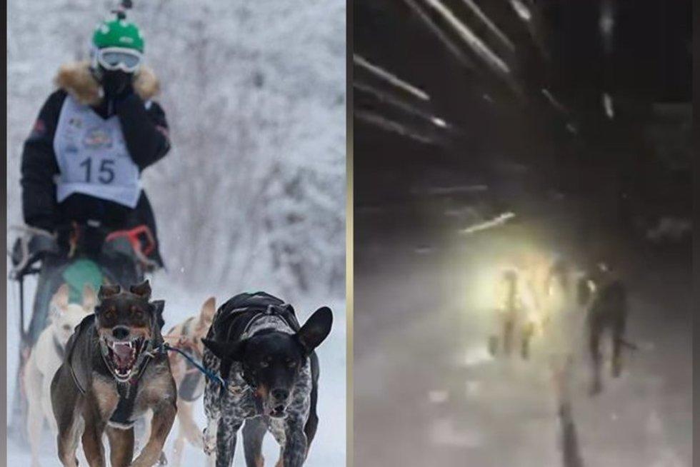 Šunų kinkinių sportas ir pasiruošimas (tv3.lt fotomontažas)