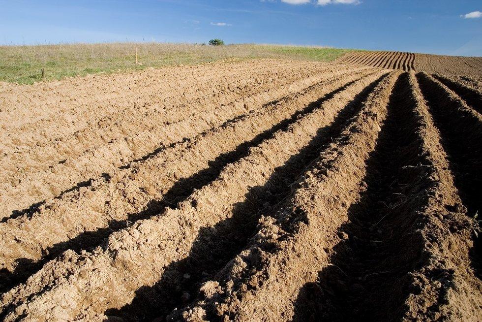 Lietuvoje – įtampa dėl sausros (nuotr. Fotodiena.lt)