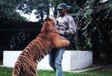 Lewisą Hamiltoną su pergale sveikino... milžiniškas tigras