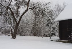 Klimatologas Bukantis įvertino, ar šiemet dar tikėtis šaltos žiemos