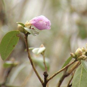 Įspėja dėl Lietuvai nebūdingų sausio orų: vasarį atėję šalčiai augalus užklups nepasiruošusius