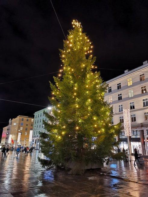 Kalėdinė eglutė Bergene