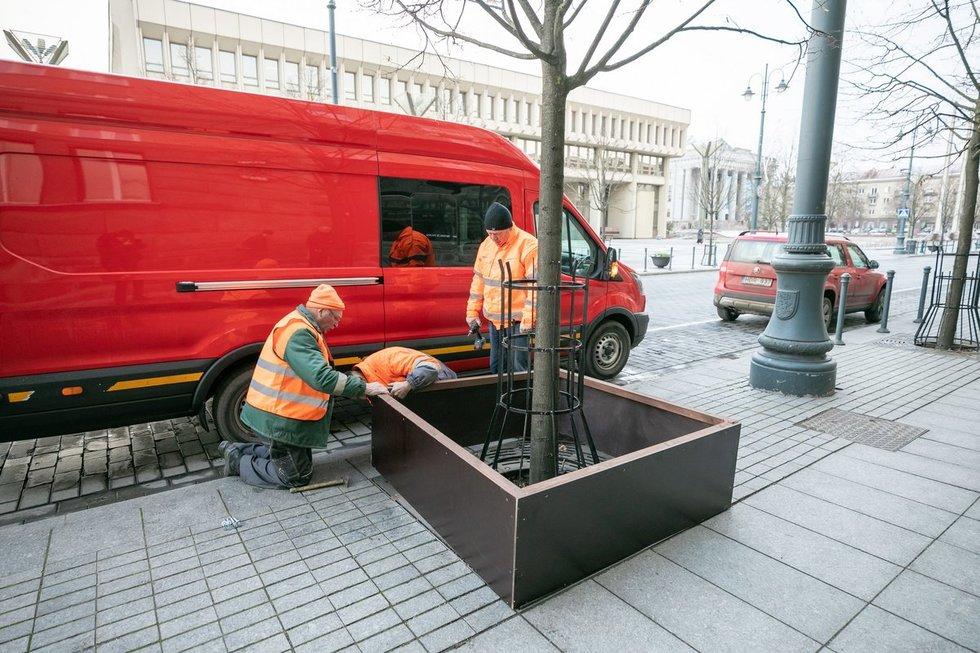 Medžių priežiūra Vilniuje
