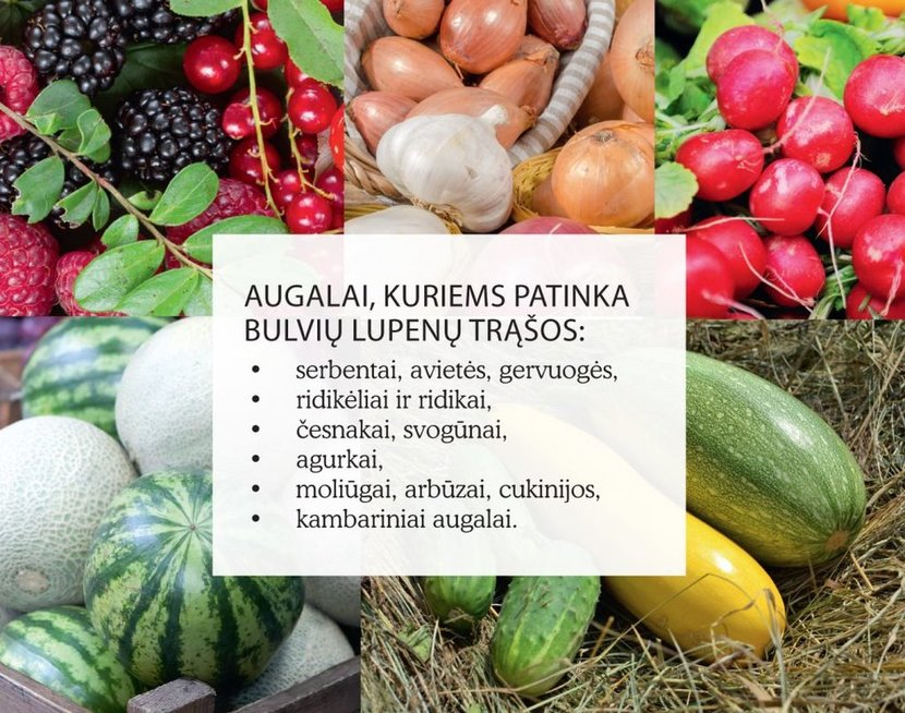 Bulvių lupenų nauda