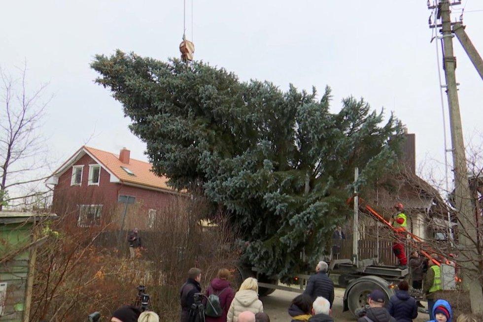 Klaipėdos Kalėdinė eglė (nuotr. stop kadras)