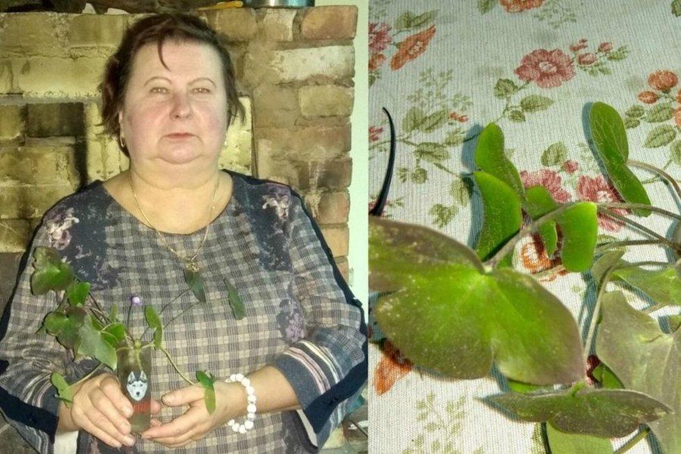 Liongina Pociuvienė/Dimitrijaus Kuprijanovo nuotr.