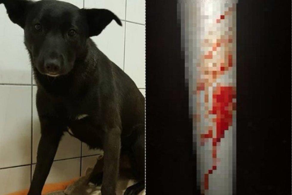 Po paviešintos šuns egzekucijos – tarnybų pasiteisinimas ir faktai