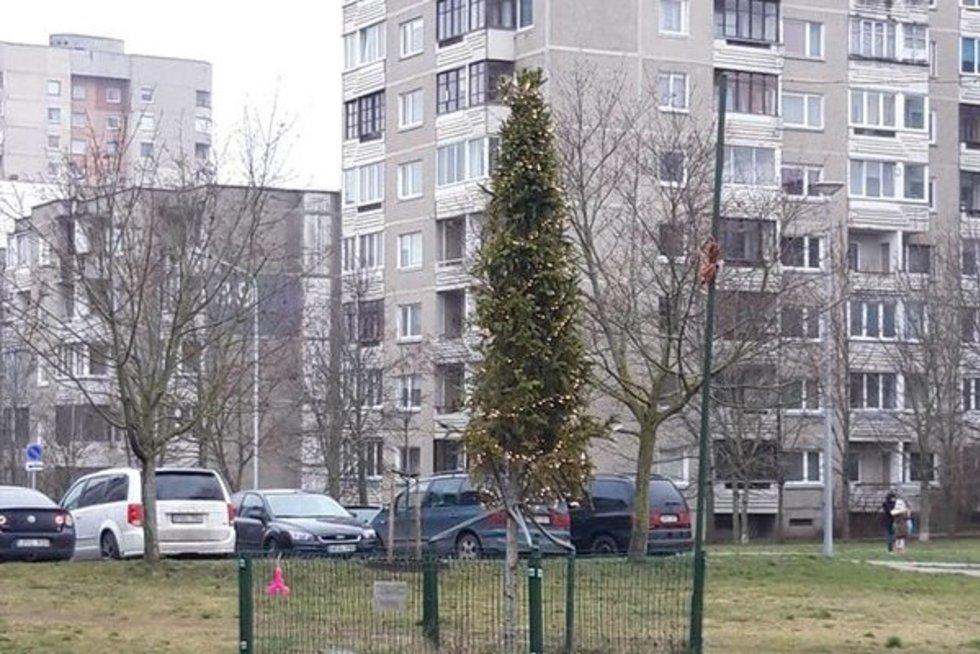 Fabijoniškių eglutė  (nuotr. asm. archyvo)