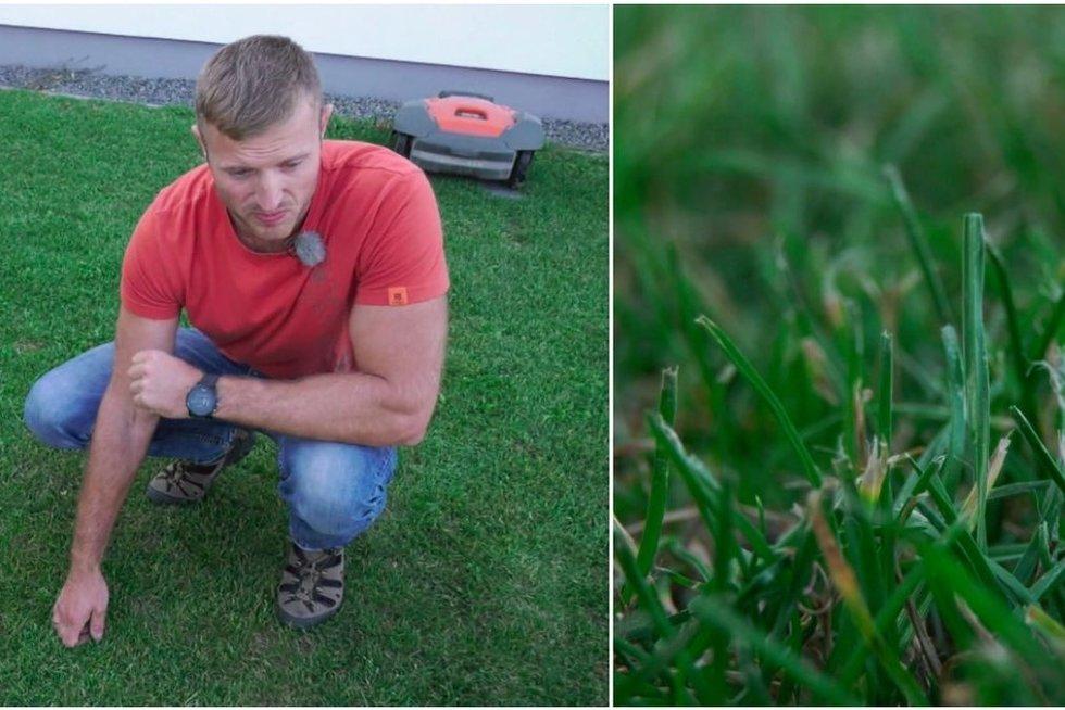 Patarimai auginantiems veją: dažniausios klaidos ir pasiruošimas žiemai