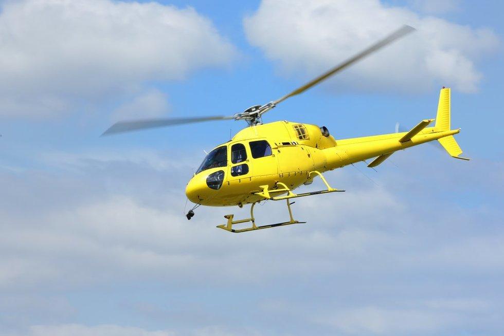 Sraigtasparnis (nuotr. 123rf.com)