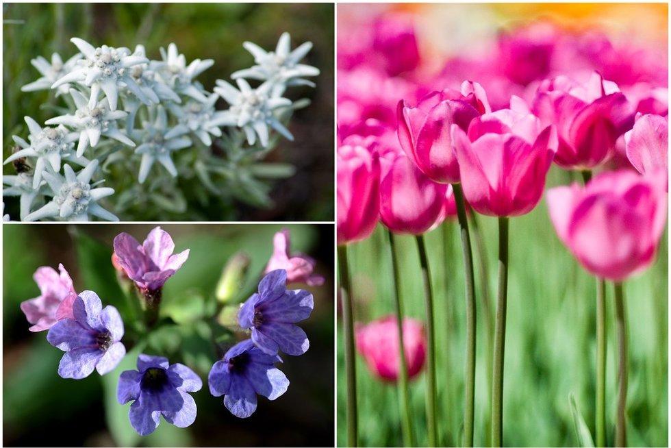 Gėlių žydėjimas (nuotr. Fotodiena.lt)
