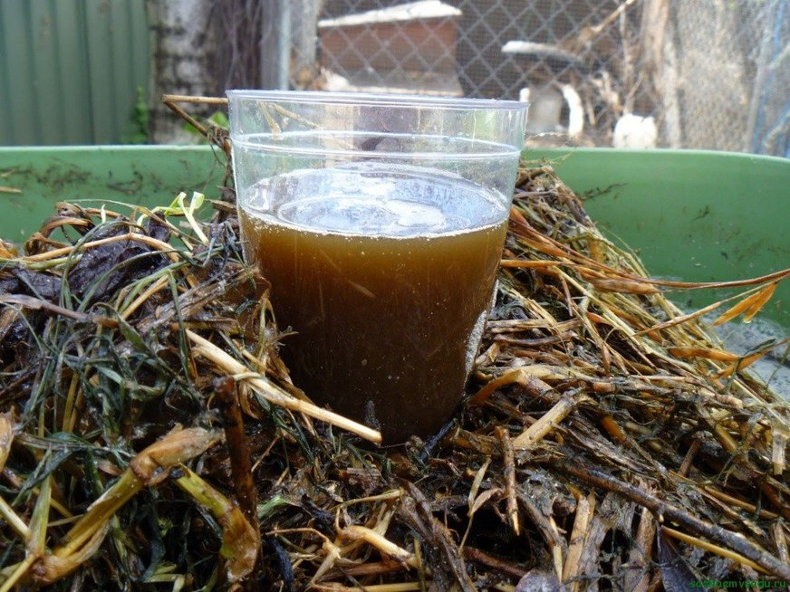 Kompostinė arbata