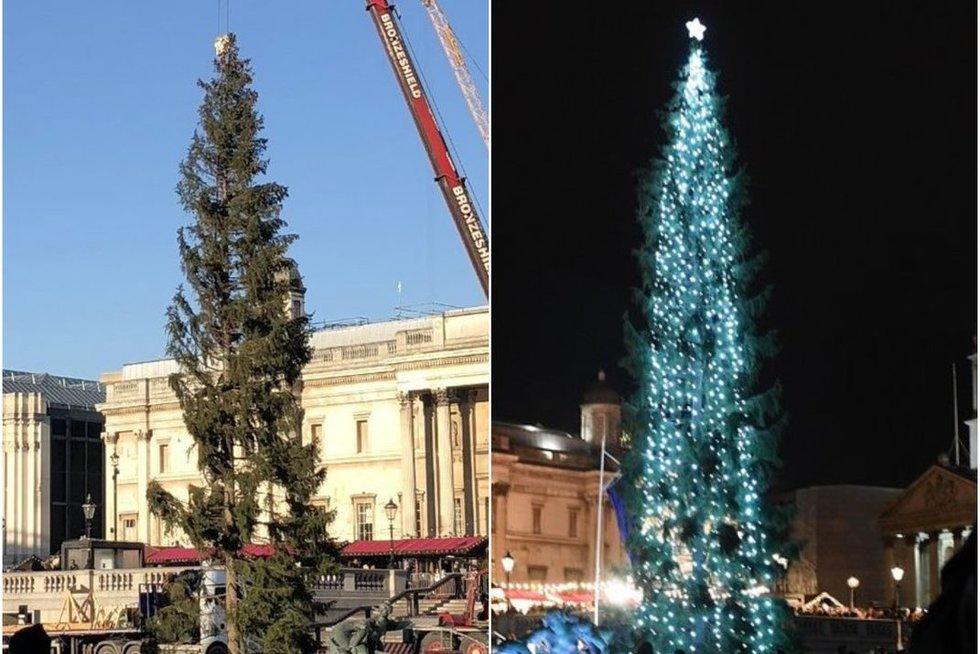 Londone įžiebta kalėdinė eglė  (nuotr. SCANPIX)