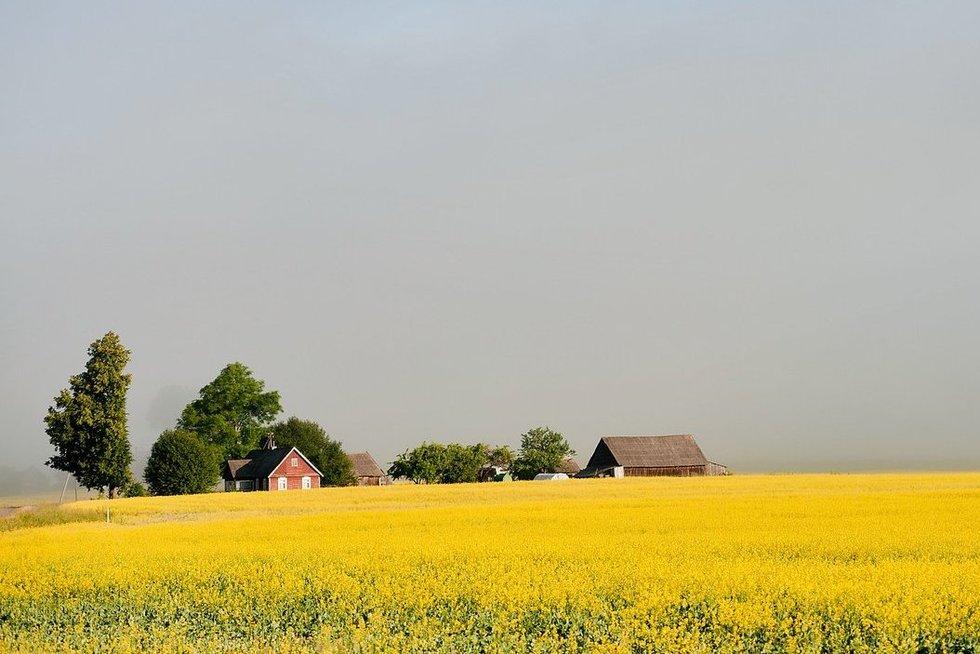 Kaimas (nuotr. Fotodiena.lt)
