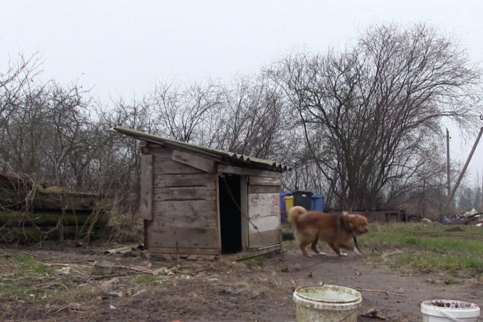 Aiškinasi, kas pakorė šunį (nuotr. stop kadras)