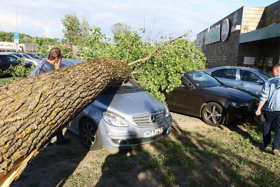 Vėjas Vilniuje vartė medžius nuotr. Broniaus Jablonsko